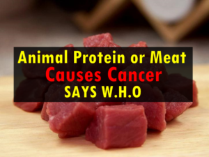 Animal Protein or Meat Causes Cancer Says W.H.O